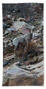 Big Horn Sheep3 Beach Towel