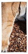 Big Paws Beach Towel
