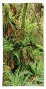 Bigleaf Maple Acer Macrophyllum Trees Beach Towel
