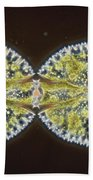 Binary Fission In Micrasterias Sp Beach Towel