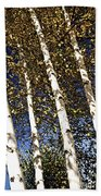 Birch Trees In Fall Beach Towel