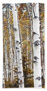 Birch Trees No.0644 Beach Towel