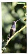 Bird - Hummingbird - The Observer Beach Towel