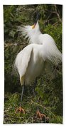 Bird Mating Display - Snowy Egret  Beach Towel