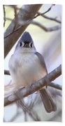 Bird - Tufted Titmouse - Busted Beach Towel