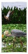 Birding Action At Circle B Bar Reserve Beach Towel