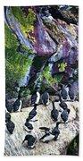 Birds At Cape St. Mary's Bird Sanctuary In Newfoundland Beach Towel by Elena Elisseeva