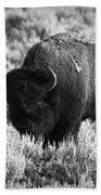 Bison In Black And White Beach Towel