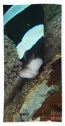 Black And White Anemone Fish Looking Beach Towel by Mathieu Meur