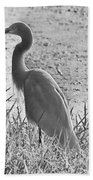 Black And White Egret  Beach Towel