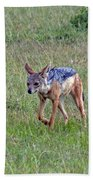 Black Backed Jackal Beach Towel