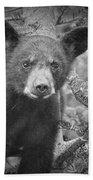 Black Bear Cub In A Pine Tree Beach Towel