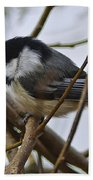 Black Capped Chick Beach Towel