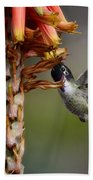 Black Chinned Hummingbird  Beach Towel