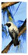 Black Faced Cuckoo Shrike V3 Beach Towel
