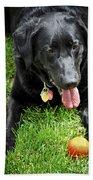 Black Lab Dog With A Ball Beach Towel by Elena Elisseeva