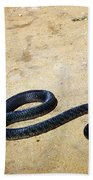 Black Mamba Beach Towel by Elizabeth Kingsley