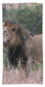 Black Maned  Lion Beach Towel