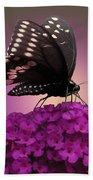 Black Swallowtail 1 Beach Towel