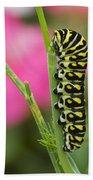 Black Swallowtail Caterpillar On Garden Beach Towel