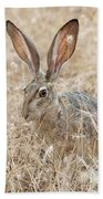 Black-tailed Hare Beach Towel