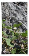 Blackberry On The Rock 04 Beach Towel