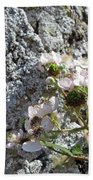 Blackberry On The Rock Square Format Beach Towel