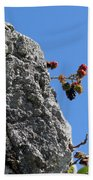 Blackberry On The Rock Top. Square Format Beach Towel