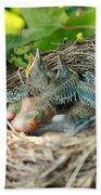 Blackbird Nest Beach Towel