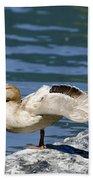 Blonde Duck Beach Towel