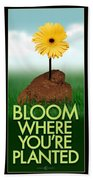 Bloom Where You Are Planted Poster Beach Towel