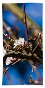 Blooming Tree With White Flowers Beach Sheet