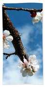 Blossoming Apricot Beach Towel