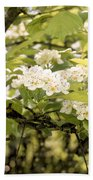 Blossoming Hawthorn Tree Beach Towel