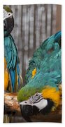 Blue And Gold Macaw Pair Beach Towel