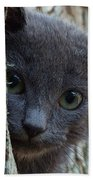 Russian Blue,cat  Beach Towel