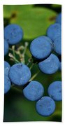 Blue Cohosh Beach Towel