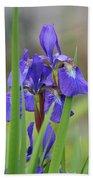 Blue Flag Iris - Dsc03987 Beach Towel