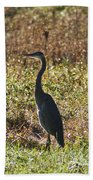 Blue Heron At Valley Forge Beach Towel