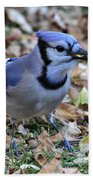Blue Jay With A Piece Of Corn In Its Mouth Beach Towel