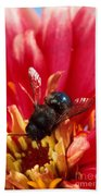 Blue Orchard Bee Beach Towel by Scott Bauer