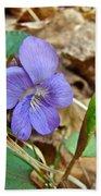 Blue Violet Wildflower - Viola Spp Beach Towel