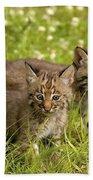 Bobcat Kittens Beach Towel