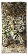 Bobcat Stalking Prey Beach Towel