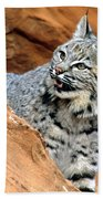 Bobcat With A Smile Beach Towel