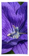Bodacious Balloon Flower Beach Towel