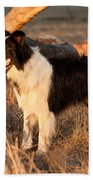 Border Collie At Sunset Beach Towel