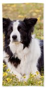 Border Collie In Field Of Yellow Flowers Beach Towel