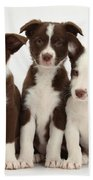 Border Collie Puppies Beach Towel