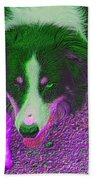 Border Collie Stare In Colors Beach Towel by Smilin Eyes  Treasures